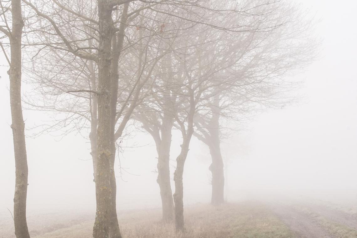 nebel (1 von 1)
